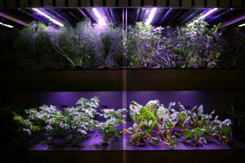 Áp dụng in 3D trong nông nghiệp - Tại sao không?