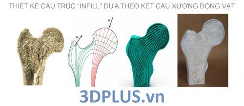 kiểu dáng, kết cấu khung xương 3D
